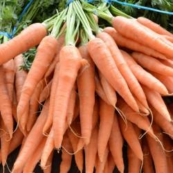 Botte de carottes nouvelles