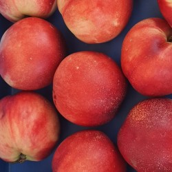 Nectarines - 1kg