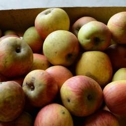 Pommes Reines des Reinettes...