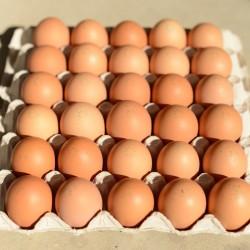 12 œufs plein air BIO
